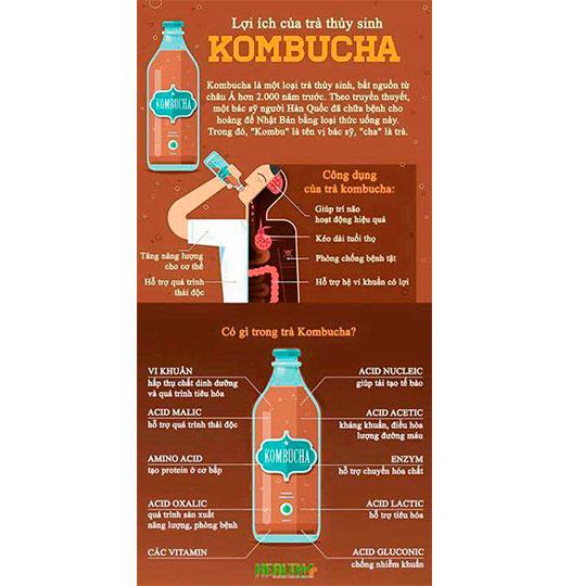 kombucha-tra-kombucha-tra bat tu-scoby4-botdauorganic